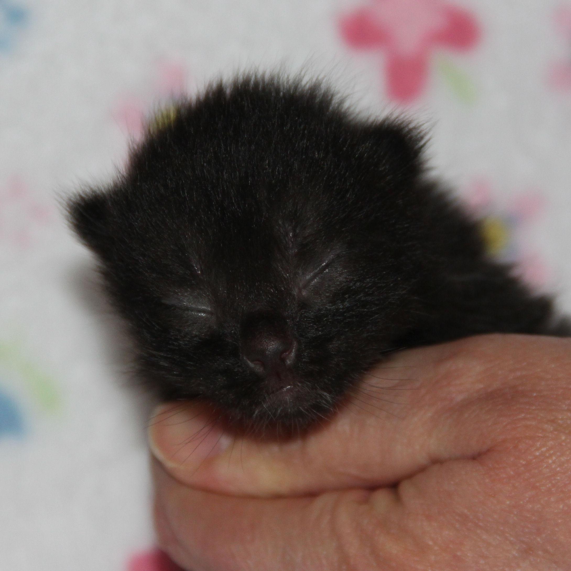 Babykatze zu vermitteln, Kira, weiblich